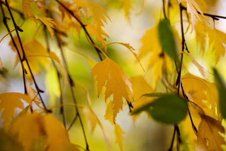 gossamer: Tree Leaves in bright autumn colors ona sunny day Stock Photo