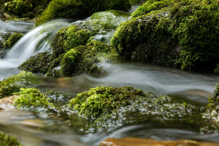 soggy: fresh water flowing in a small clear alpine mountain creek Stock Photo