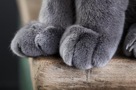 テーブルの上に座っている間足の柔らかい猫の詳細ショット