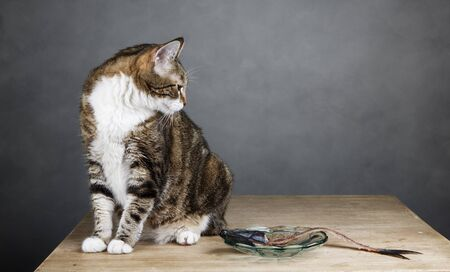 Portrait of a three colored housecat sitting on table with an eaten herring Stock Photo - 18889777