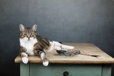 Portrait of a three colored housecat sitting on table with an eaten herring looking satisfied and well fed Stock Photo - 18889897