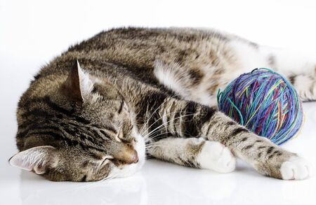 Portrait of a playful housecat toying with ball of wool on white surface photo