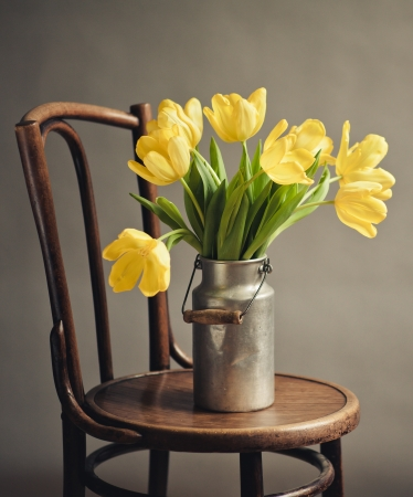 Beautiful bright yellow tulips in Still Life with old Milk Can on antique wooden Chair photo