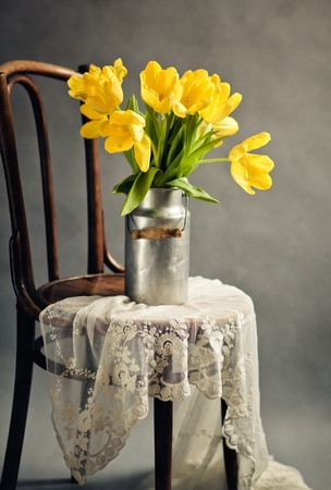 Beautiful bright yellow tulips in Still Life with old Milk Can on antique wooden Chair with Lace Cloth photo