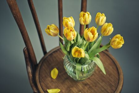 Beautiful bright yellow tulips in Still Life in Glass Vase on antique wooden Chair photo