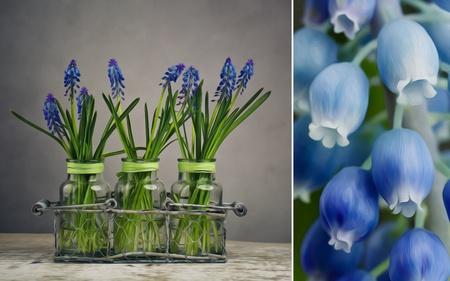 stilllife: Still Life Illustration image with blue grape hycinth flowers in glass vases