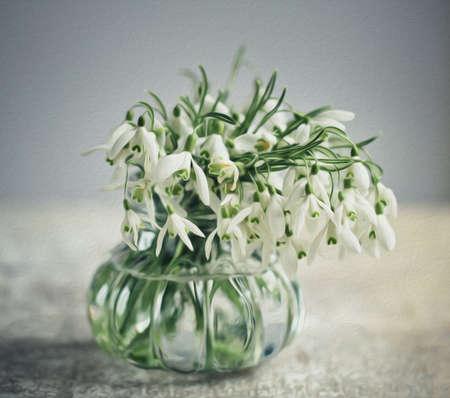 Beautiful white snowdrop flowers in spring studio shot photo