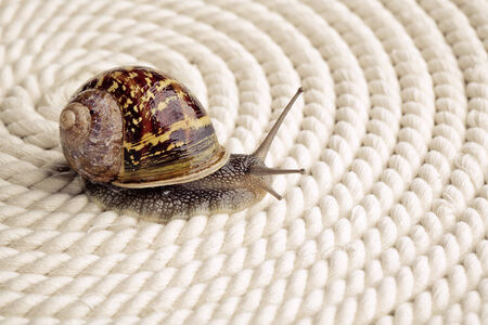 Snail crawling on table, looking around curiously Stock Photo - 24715581