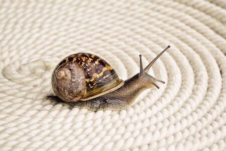 curiously: Snail crawling on table, looking around curiously Stock Photo