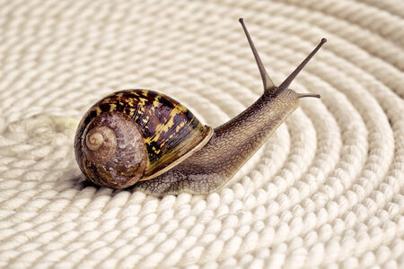 Snail crawling on table, looking around curiously Stock Photo - 24715620