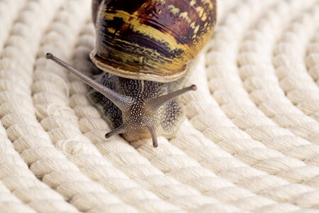 looking around: Snail crawling on table, looking around curiously Stock Photo