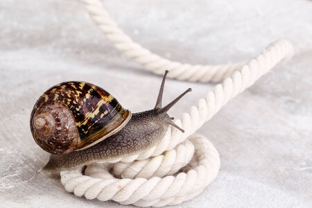 Snail crawling on table, looking around cuusly Stock Photo - 24715627