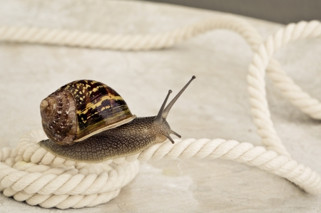Snail crawling on table, looking around cuusly Stock Photo - 24715629