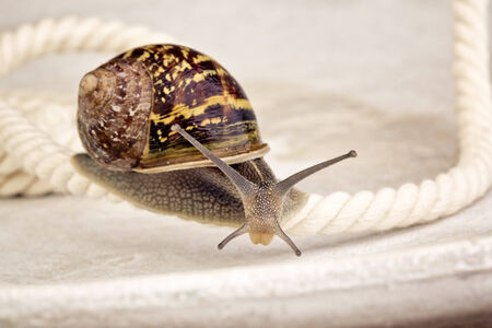 Snail crawling on table, looking around curiously Stock Photo - 24715631