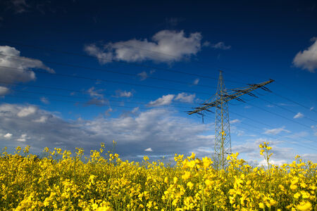 Electric Pylon in countryside rapeseed field on a summer evening photo