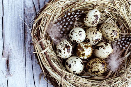 Quail Eggs and Feathers in Birds Nest photo