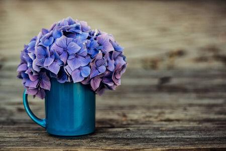 Still Life with blue  pastel colored Hortensia Flowers in Tin Can photo
