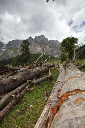felled: Trunks of felled trees in the austrian alps