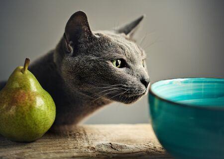 Curious Cat inspecting fresh ripe Pear photo