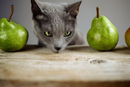 Curious Cat inspecting fresh ripe Pears photo