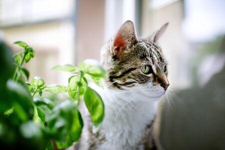 housecat: Portrait of a Three-Colored common Housecat