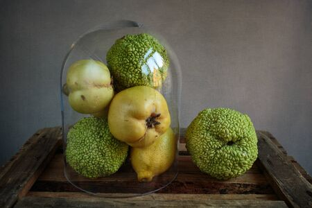 stillife: Still Life with Fruits of Quince, Lemon and Osage Orange under glass