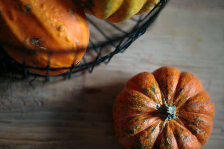 cucurbit: Small Orange Pumpkin Stock Photo