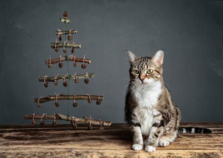catfood: Cat with symbolic Christmas Tree decorated with cat food pellets