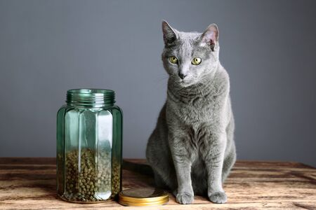 catfood: Beschreibung Stock Photo