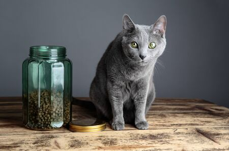 housecat: Beschreibung Stock Photo