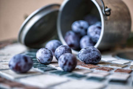 harvested: Fresh bright lilac colored Prunes harvested from Farm tree Stock Photo