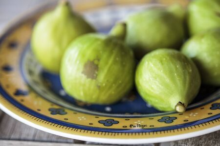 Fresh Ripe Figs collected from Fig Tree in Summer on Italian Farm Stock Photo