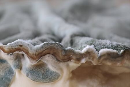 depraved: Dark grey or Black Mold Fungus growing on old cheese Stock Photo