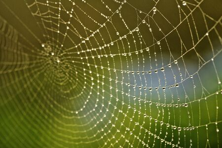 Close Up Macro of a Spider Web with Fresh Dew Drops in the Morning Stok Fotoğraf - 61521668