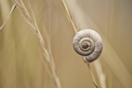 Small Brown Snail on Autum Grass Blade