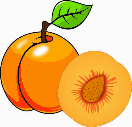 Apricot vector design Stockfoto
