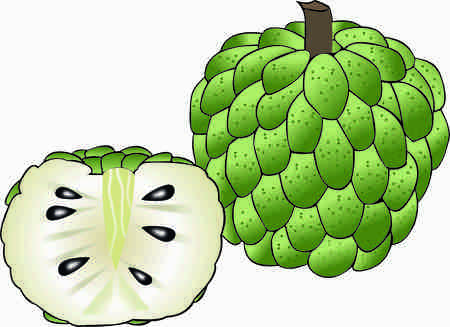Custard Apple vector design