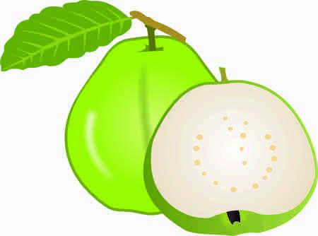 Guava vector design