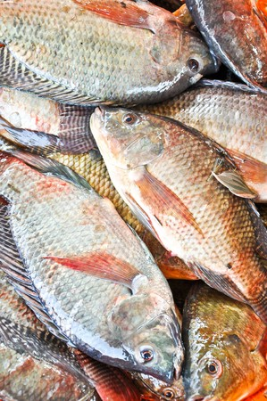 Fresh Tilapia or Oreochromis locally in Thai is Nil (Black) Fish Stock Photo - 8107075