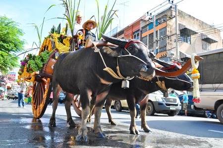 Water Buffalo Parade on the road in Buffalo Racing Festival. Editorial