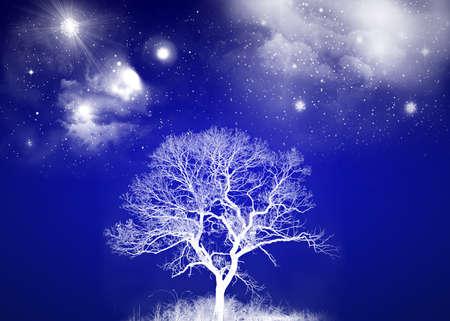 White Tree with Night Sky Stock Photo - 8202654