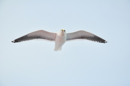 Seagull fly in the sky Stock Photo - 9632321