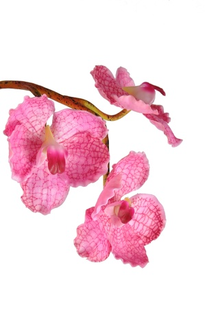 Artificial Pink Vanda on white background photo