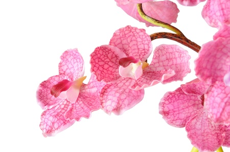 Artificial Pink Vanda on white background