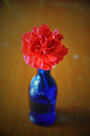 red carnation in blue vase photo
