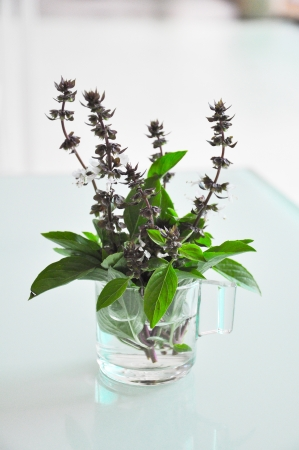 Mint Leaves in small glass photo