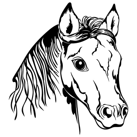 line drawings: Outline of horse head. Black and white