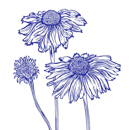 flower marguerite Vector