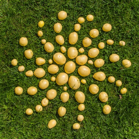 Mandala of fresh potatoes photo