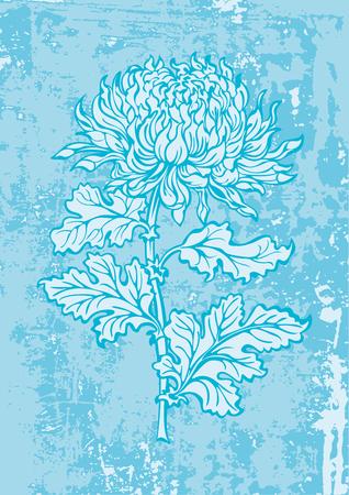 japanese chrysanthemum: japanese chrysanthemum flower on grunge background Illustration